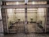 Alcatraz (Zellen)